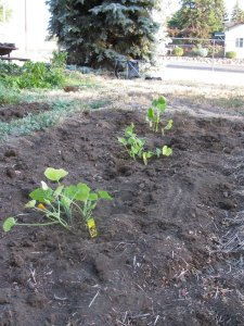 How does your garden grow: July 16